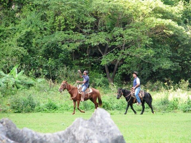 cuba/udflugter/hest-i-viales.jpg