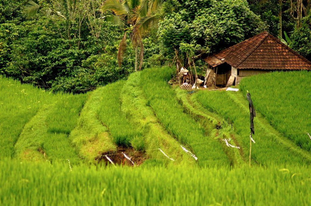 Ø-hop til Bali, Komodo, Rinca og Gili-øerne i Indonesien
