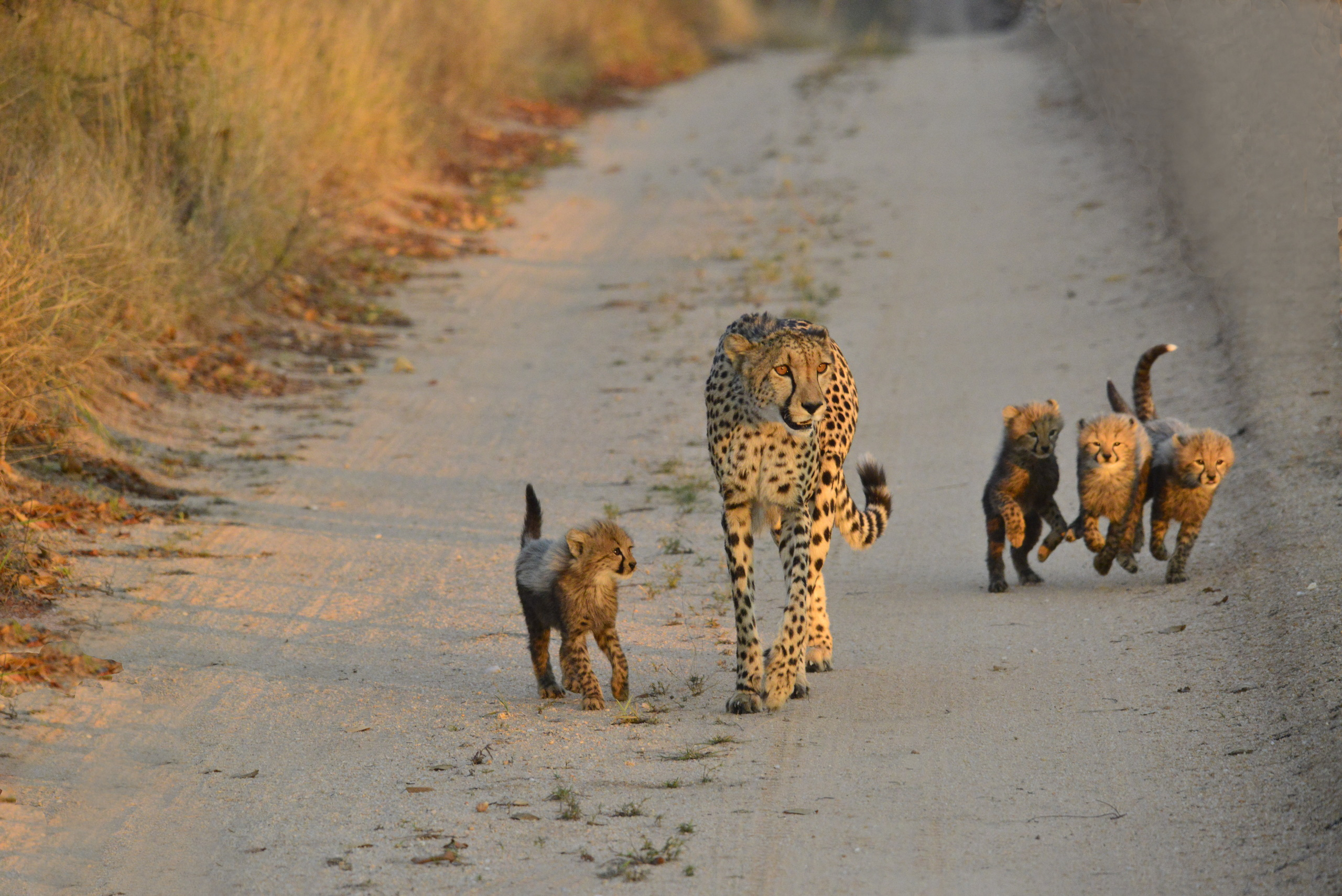 Total afslapning og skøn safari i Makutsi i Sydafrika