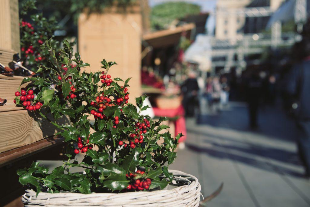 Kristjørn med grønne blade og røde bær i potte