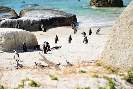 Rundrejse i Sydafrika - Safari, Garden Route og Cape Town