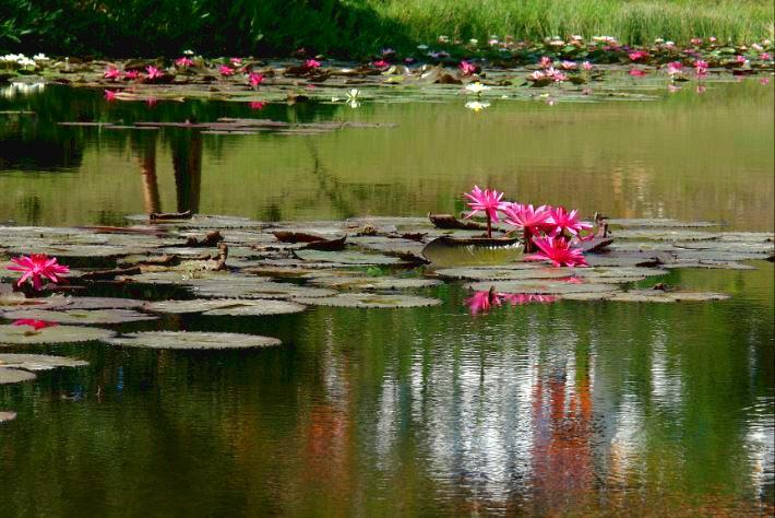 Rundrejse i Cuba med fokus på natur. Se fx LasTerrazas