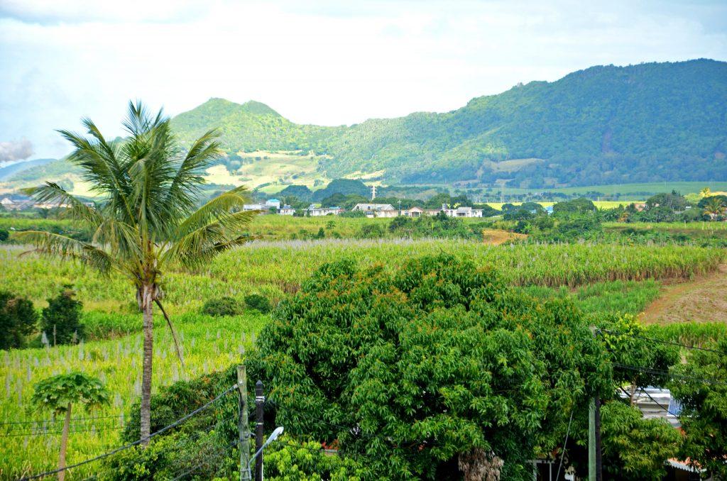 Det indre af Mauritius er meget grønt og med bjerge