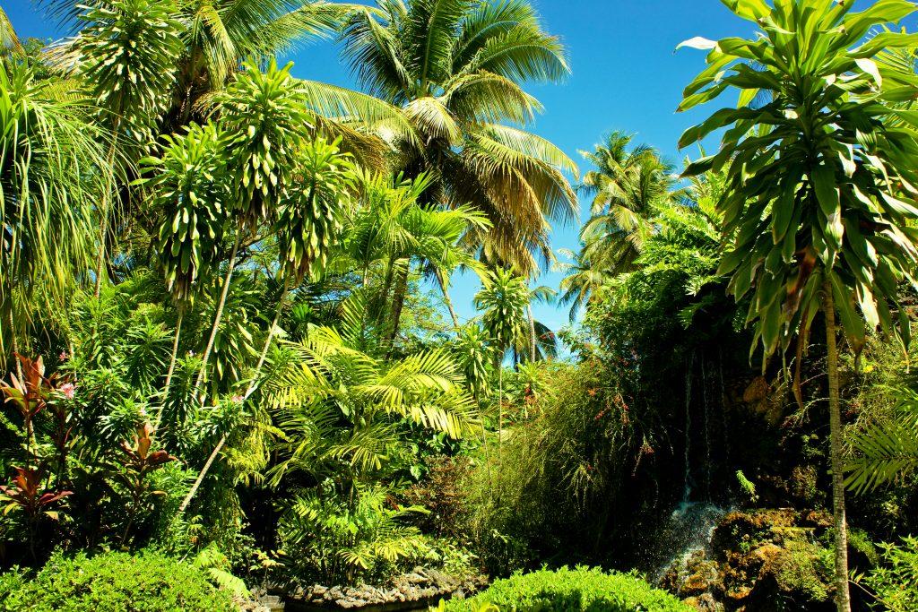 Barbados botaniske haver har tropiske træer, planter og dyr