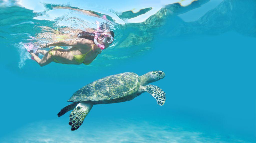 Ferie i Barbados er garanti for verdensklasse snorkling og dykning