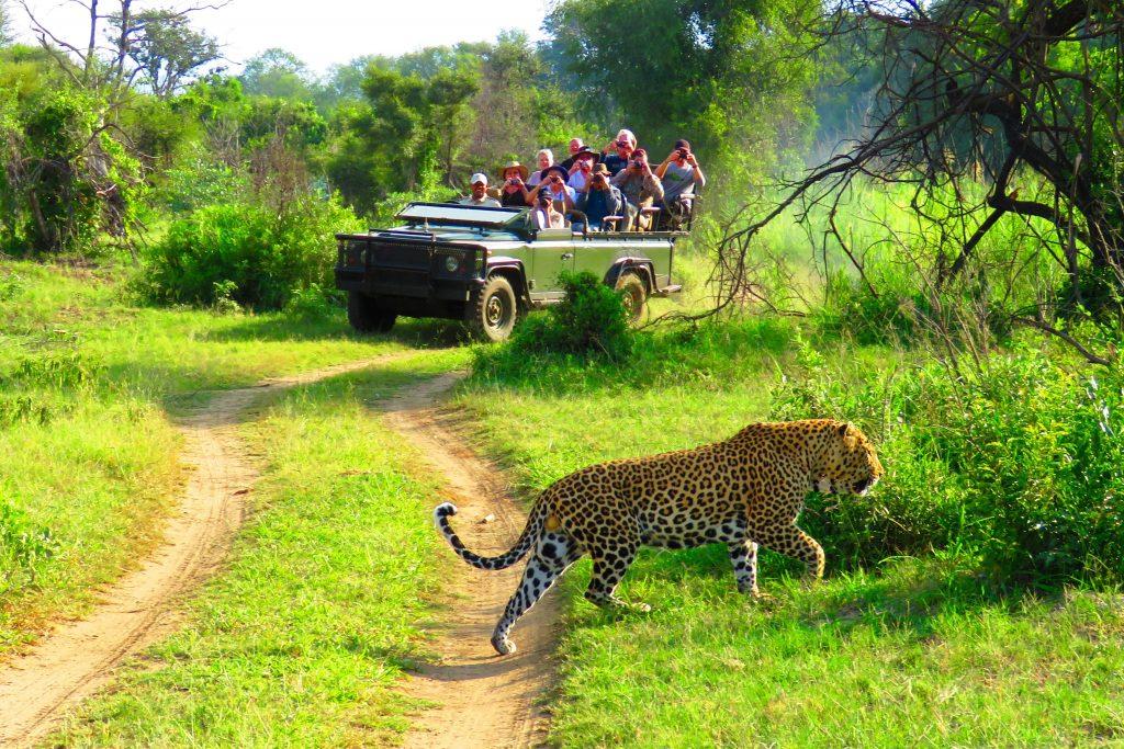 Makutsi_Safaris09