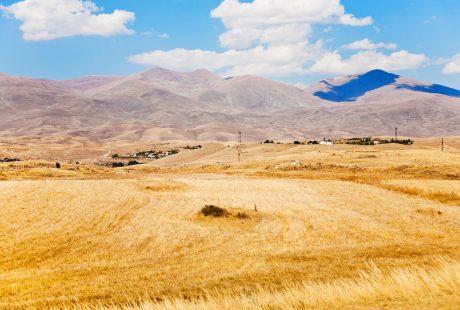 Gule marker i Armenien med bløde bjerge og blå himmel
