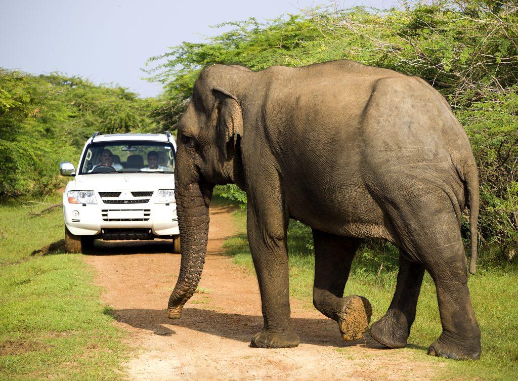 På en rejse til Sri Lanka ser du også nationalparker med elefanter