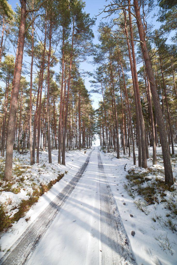 På en rejse til Letland ser du masser af flotte skove