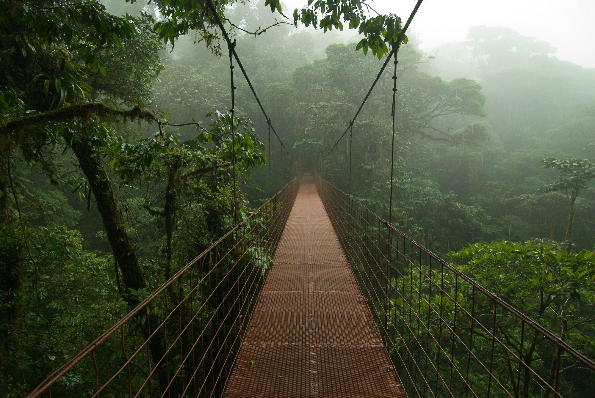På en rejse til Costa Rica kan du gå på broer i trækronerne i Monteverde