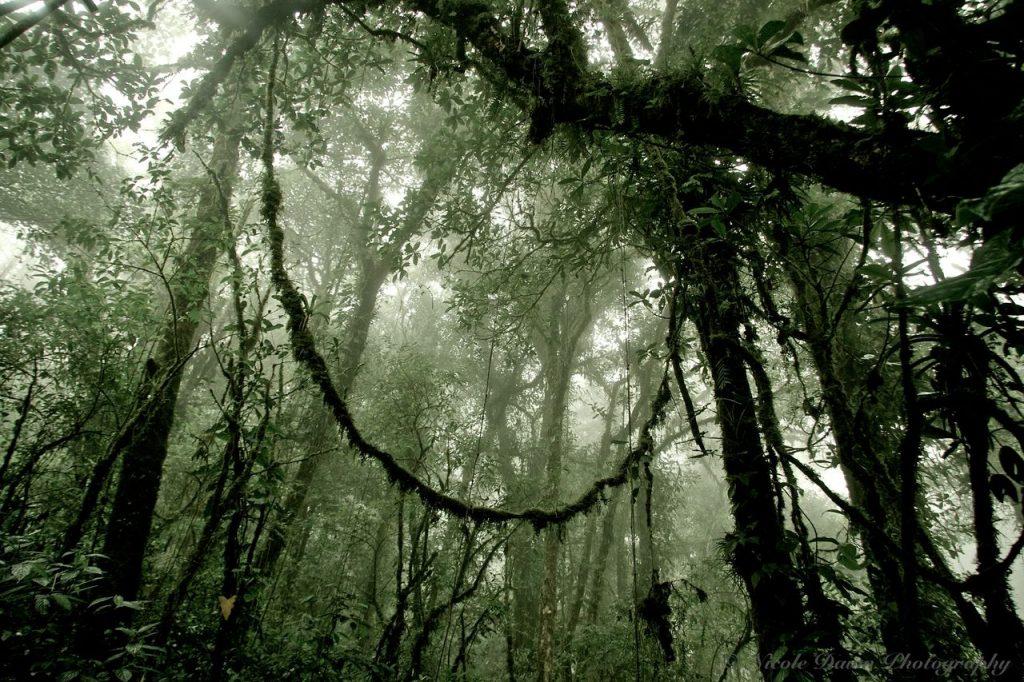 Regnskov med lianer i Costa Rica
