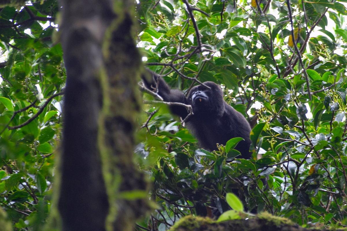 På en rejse til Costa Rica ser du regnskov og aber