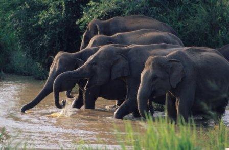 På en rejse til Sri Lanka ser du elefanter mange steder
