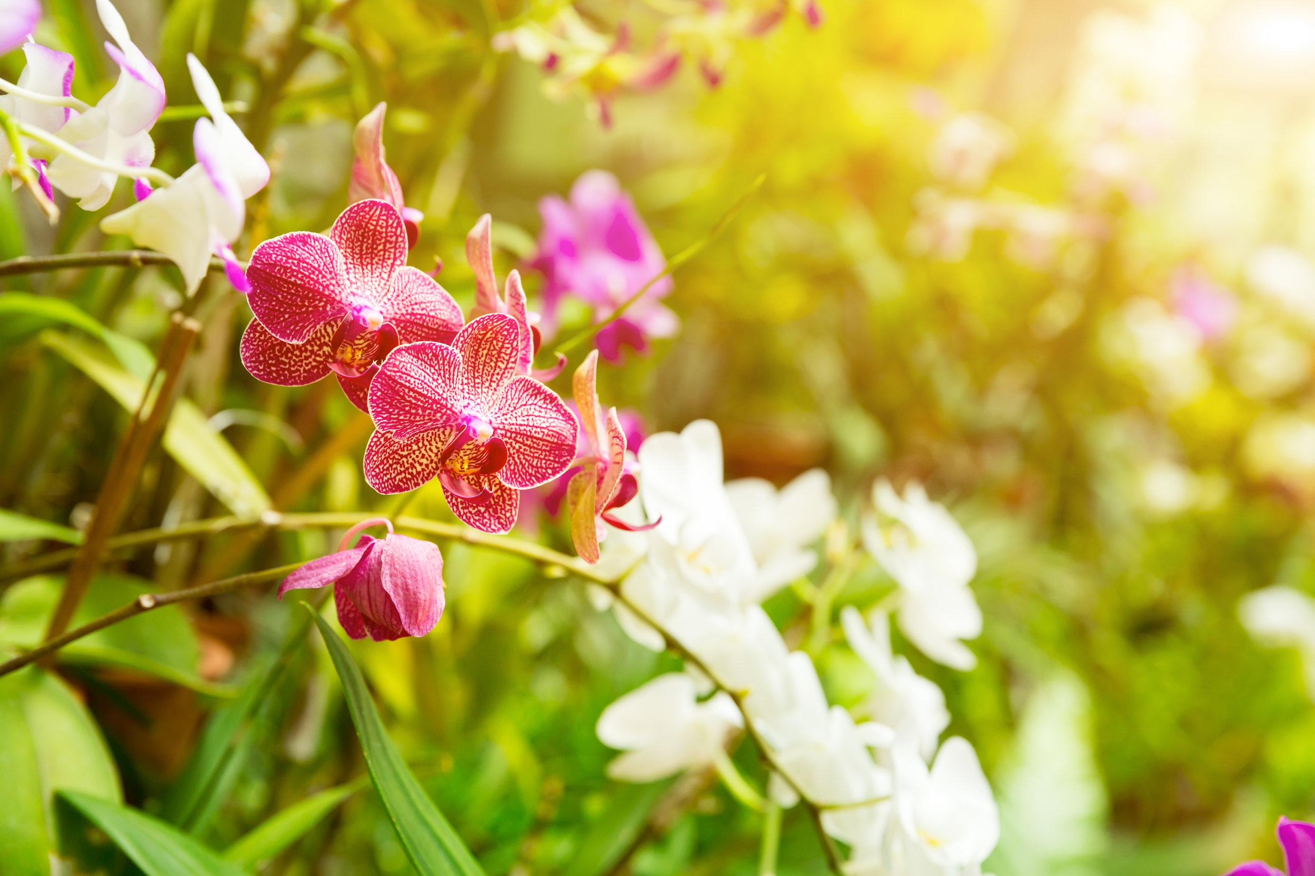 På en rejse til Sri Lanka bør du se Peradeniya Botaniske Have
