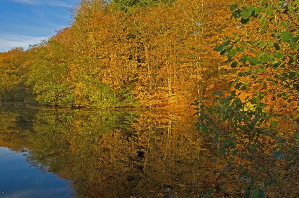 På en ferie i Vejle om efteråret er skoven flot