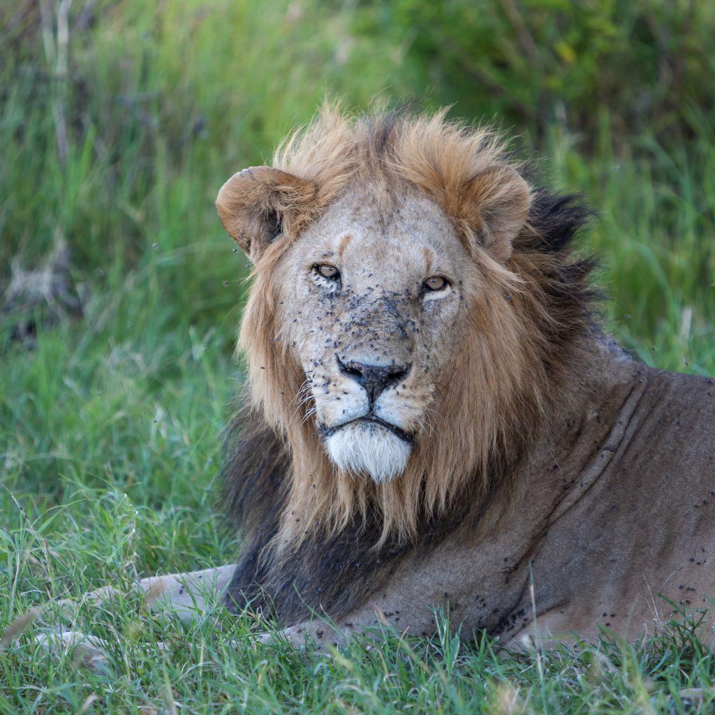 På en ferie i Vejle kan du også se Givskud Zoo
