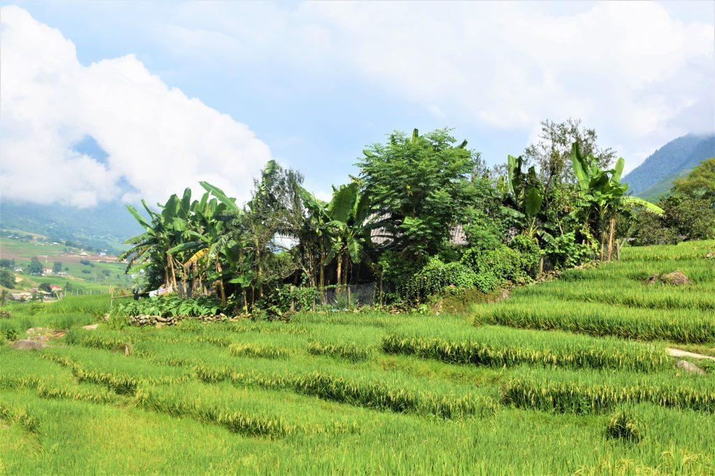 På en rejse til Vietnam ser du Sapa