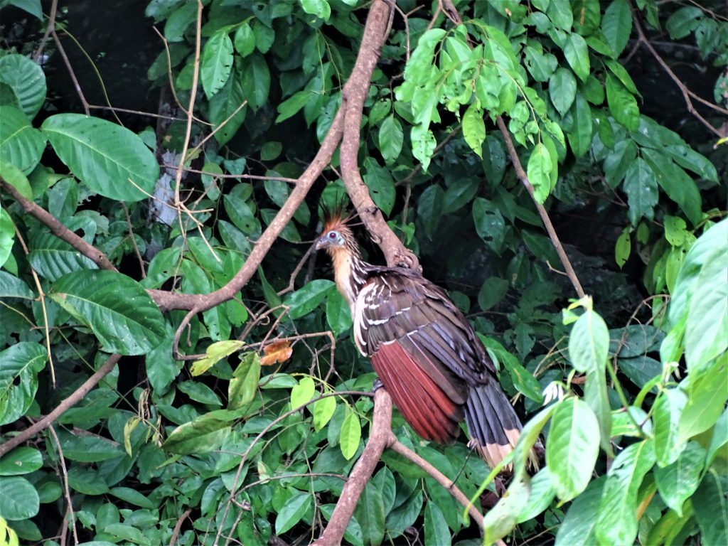 å rejser til Peru skal du se fantastiske Posada Amazonica
