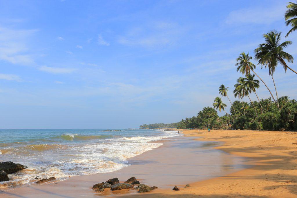 Rejser-til-Sri-Lanka-Bentota-Lang-strand-med-palmer
