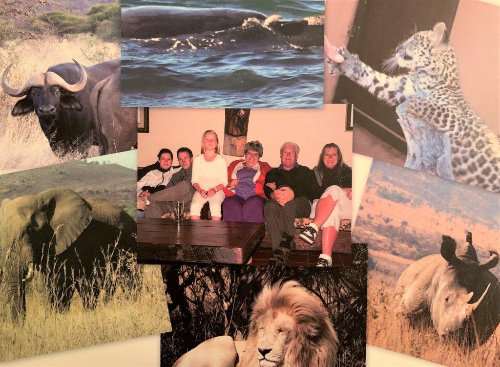 Sydafrika-billedcollage med dyr