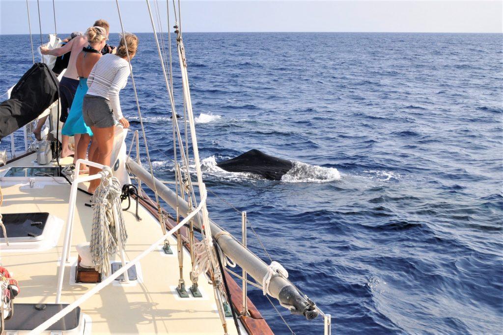 Mennesker på dækket af sejlbåd, mens de kigger på hvaler