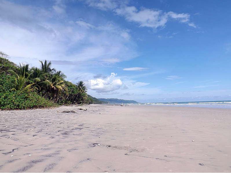 Lang sandstrand ved havet med palmer og blå himmel