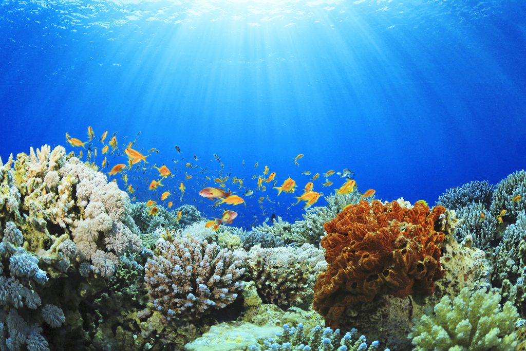 Koralrev med sollys foroven og farvede fisk